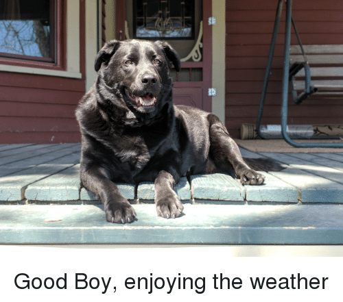 Good, The Weather, and Weather: Good Boy, enjoying the weather