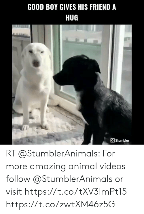 Animal Videos: GOOD BOY GIVES HIS FRIEND A  HUG  S Stumbler  HE RT @StumblerAnimals: For more amazing animal videos follow @StumblerAnimals or visit https://t.co/tXV3ImPt15 https://t.co/zwtXM46z5G