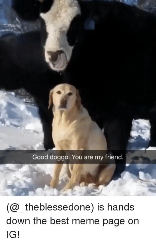 Good Doggo: Good doggo. You are my friend (@_theblessedone) is hands down the best meme page on IG!