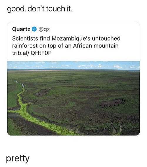 Memes, Good, and 🤖: good. don't touch it.  Quartz @qz  Scientists find Mozambique's untouched  rainforest on top of an African mountain  trib.al/iQHtFOF pretty