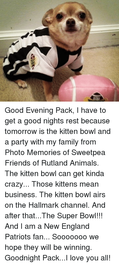 New England Patriot: Good Evening Pack,  I have to get a good nights rest because tomorrow is the kitten bowl and a party with my family from Photo Memories of Sweetpea Friends of Rutland Animals. The kitten bowl can get kinda crazy... Those kittens mean business.  The kitten bowl airs on the Hallmark channel.  And after that...The Super Bowl!!!  And I am a New England Patriots fan... Sooooooo we hope they will be winning.  Goodnight Pack...I love you all!