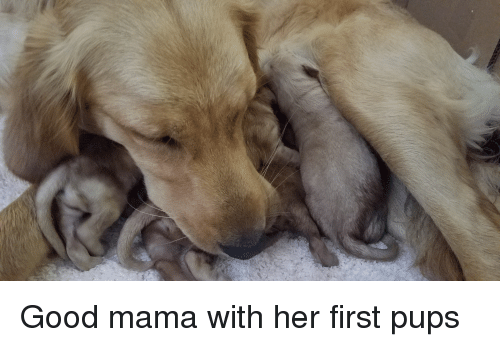 Good, Her, and Mama: Good mama with her first pups