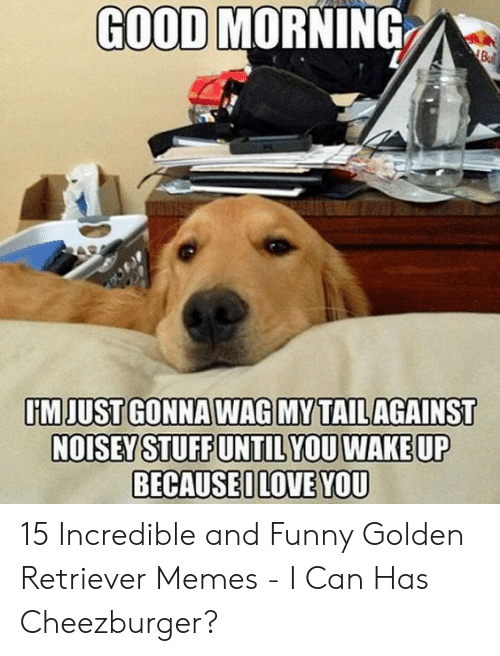 Funny, Love, and Memes: GOOD MORNING  Bul  IİMJUSTGONNAWAGIMYATAIL AGAINST  BECAUSEI LOVE YOU 15 Incredible and Funny Golden Retriever Memes - I Can Has Cheezburger?