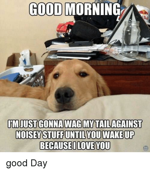 Good Morning, Good, and Day: GOOD MORNING  IMJUST GONNAWAG MYTAILAGAINST  BECAUSEILOVE YOU  to good Day