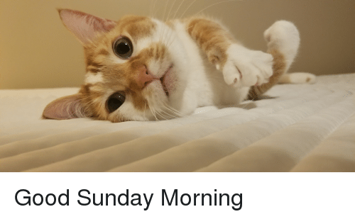 Image result for good sunday morning