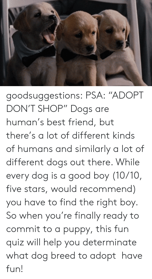 """Best Friend, Dogs, and Gif: goodsuggestions:  PSA:""""ADOPT DON'T SHOP"""" Dogs are human's best friend, but there's a lot of different kinds of humans and similarly a lot of different dogs out there. While every dog is a good boy (10/10, five stars, would recommend) you have to find the right boy. So when you're finally ready to commit to a puppy, this fun quiz will help you determinate what dog breed to adopt have fun!"""