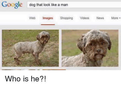 Gøogle: Google  dog that look like a man  Web Images  Shopping  Videos  News  More Who is he?!