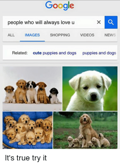 Cute, Dogs, and Google: Google  people who will  always love u  ALL IMAGES  SHOPPING  VIDEOS  NEWS  Related  cute puppies and dogs  puppies and dogs It's true try it