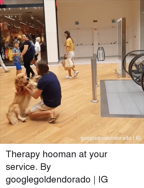 Dank, 🤖, and Service: googlegoldendorado IG Therapy hooman at your service.  By googlegoldendorado | IG