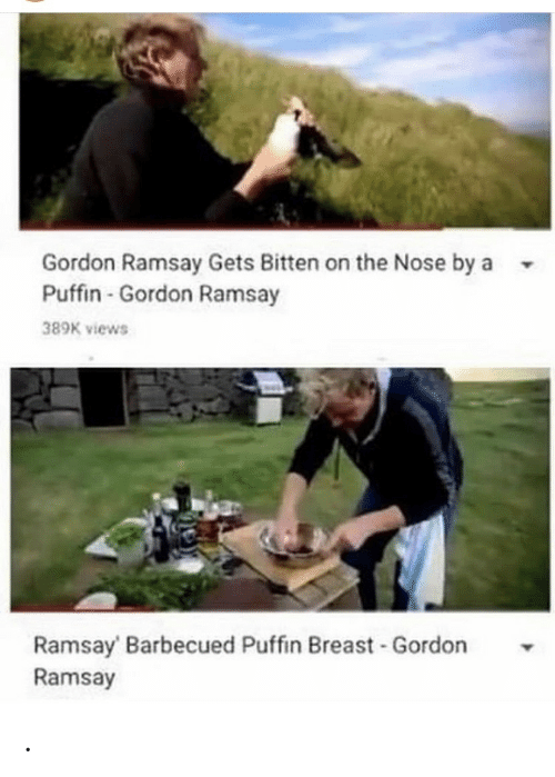 Gordon Ramsay: Gordon Ramsay Gets Bitten on the Nose by a  Puffin-Gordon Ramsay  389K views  Ramsay Barbecued Puffin Breast Gordon  Ramsay .