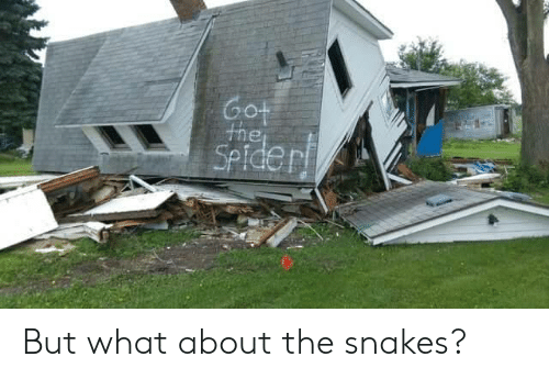 Snakes: Got  the  SPiderf But what about the snakes?