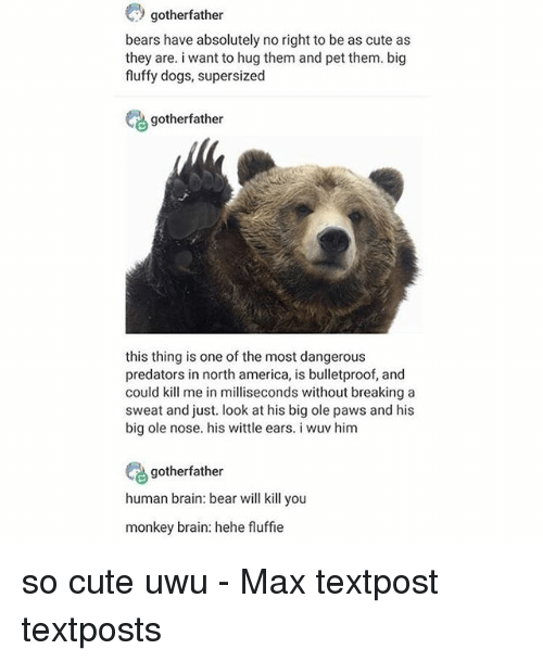 Textposts: gotherfather  bears have absolutely no right to be as cute as  they are. i want to hug them and pet them. big  fluffy dogs, supersized  gotherfather  this thing is one of the most dangerous  predators in north america, is bulletproof, and  could kill me in milliseconds without breaking a  sweat and just. look at his big ole paws and his  big ole nose. his wittle ears. i wuv him  gotherfather  human brain: bear will kill you  monkey brain: hehe fluffie so cute uwu - Max textpost textposts