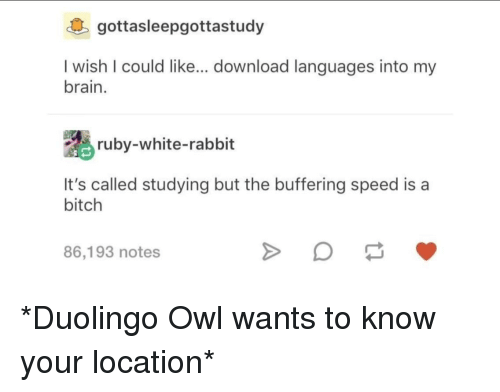Bitch, Brain, and Rabbit: gottasleepgottastudy  I wish I could like... download languages into my  brain.  ruby-white-rabbit  It's called studying but the buffering speed is a  bitch  86,193 notes *Duolingo Owl wants to know your location*
