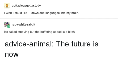 Advice, Bitch, and Future: gottasleepgottastudy  Iwish I could like... download languages into my brain.  ruby-white-rabbit  It's called studying but the buffering speed is a bitch advice-animal:  The future is now