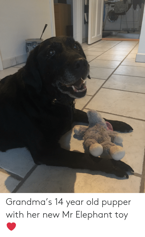 Grandma, Elephant, and Old: Grandma's 14 year old pupper with her new Mr Elephant toy ❤️