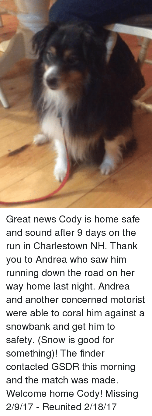 codis: Great news Cody is home safe and sound after 9 days on the run in Charlestown NH.   Thank you to Andrea who saw him running down the road on her way home last night.  Andrea and another concerned motorist were able to coral him against a snowbank and get him to safety. (Snow is good for something)! The finder contacted GSDR this morning and the match was made.    Welcome home Cody!    Missing 2/9/17 - Reunited 2/18/17
