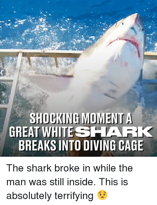 Dank, Shark, and 🤖: GREAT WHITESHARK  BREAKS INTO DIVING CAGE The shark broke in while the man was still inside. This is absolutely terrifying 😧