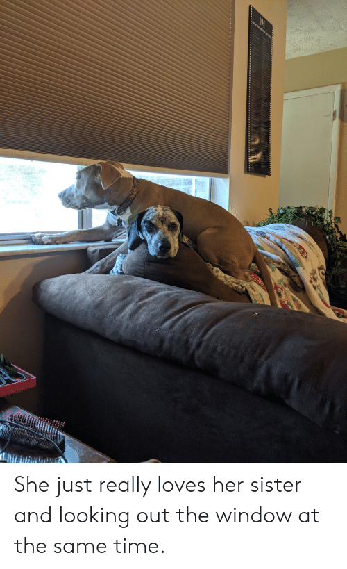 Quotes, Time, and Her: GREATEST MOYTE QUOTES  wwip She just really loves her sister and looking out the window at the same time.
