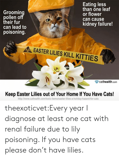 Cats, Easter, and Kitties: Groomin  ollen o  heir fur  can lead to  poisoning.  Eating less  than one leaf  or flower  can cause  kidney failure!  EASTER LILIES KILL KITTIES  眥cathealth.com  Keep Easter Lilies out of Your Home If You Have Cats!  http:l/www.cathealth.com/toxic-items/easter-lilies-a-holiday-hazard-for-cats theexoticvet:Every year I diagnose at least one cat with renal failure due to lily poisoning. If you have cats please don't have lilies.