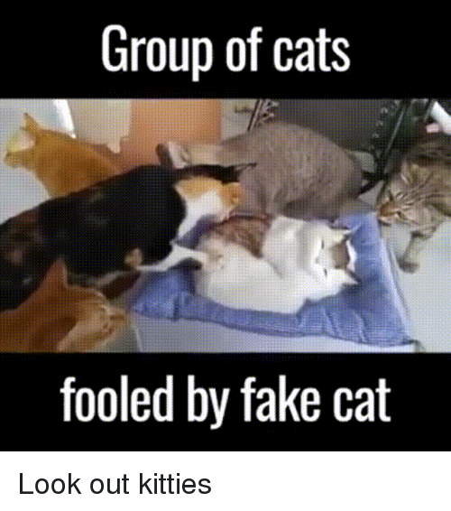 Cats, Fake, and Kitties: Group of cats  fooled by fake cat Look out kitties