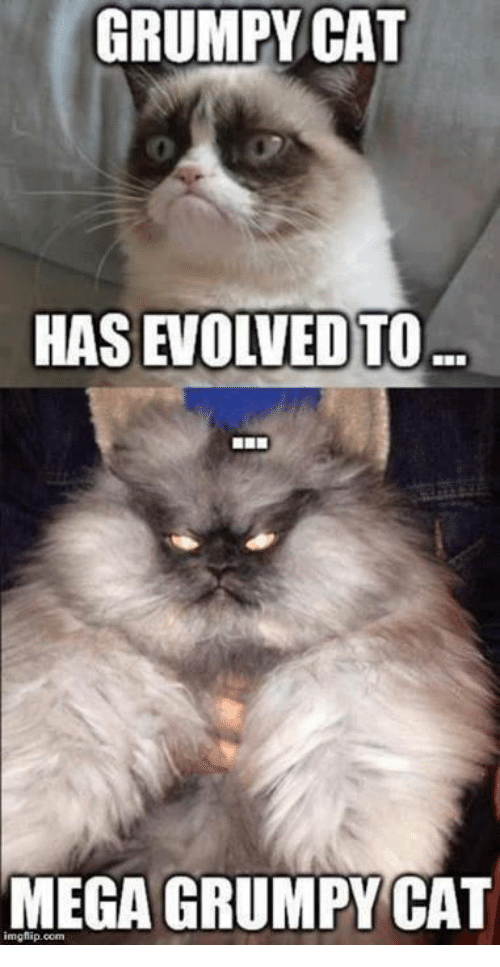 Grumpy Cats: GRUMPY CAT  HAS EVOLVED)TO  MEGA GRUMPYCAT