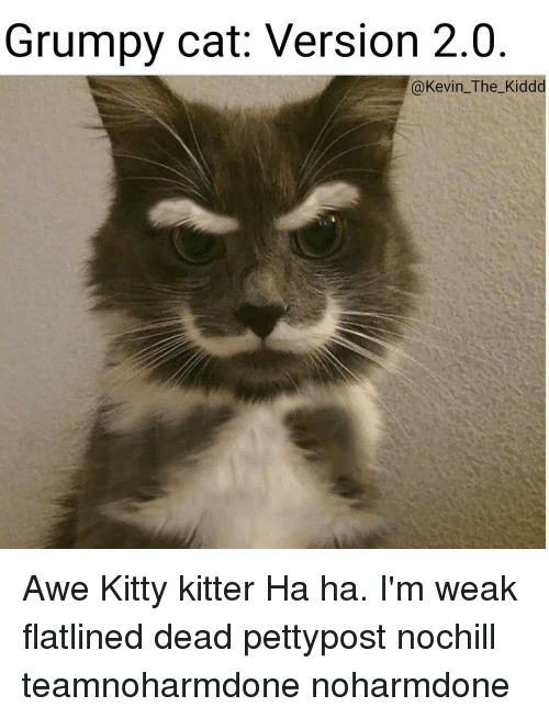 Grumpy Cats: Grumpy cat: Version 2.0  @Kevin The Kidd Awe Kitty kitter Ha ha. I'm weak flatlined dead pettypost nochill teamnoharmdone noharmdone