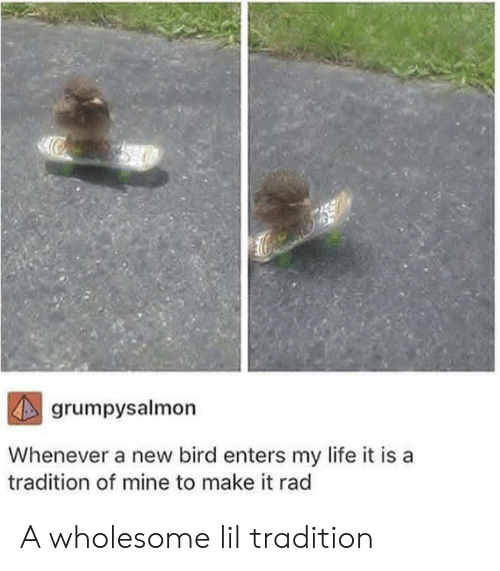 Life, Rad, and Wholesome: grumpysalmon  Whenever a new bird enters my life it is  tradition of mine to make it rad A wholesome lil tradition