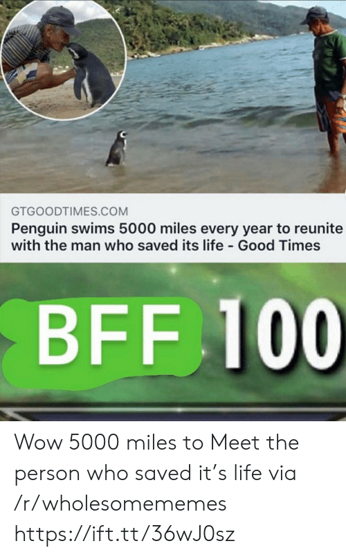 Meet The: GTGOODTIMES.COM  Penguin swims 5000 miles every year to reunite  with the man who saved its life Good Times  BFF 100 Wow 5000 miles to Meet the person who saved it's life via /r/wholesomememes https://ift.tt/36wJ0sz