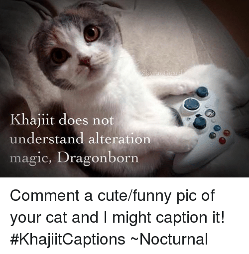 nocturne: Guar  Khajiit does not  understand alteration  magic, Dragonborn Comment a cute/funny pic of your cat and I might caption it!  #KhajiitCaptions  ~Nocturnal
