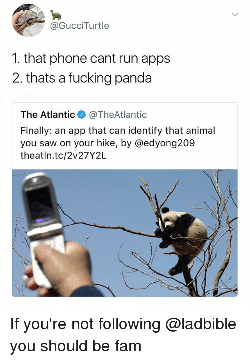 Fam, Fucking, and Phone: @GucciTurtle  1. that phone cant run apps  2. thats a fucking panda  The Atlantic@TheAtlantic  Finally: an app that can identify that animal  you saw on your hike, by @edyong209  theatln.tc/2v27Y2L If you're not following @ladbible you should be fam