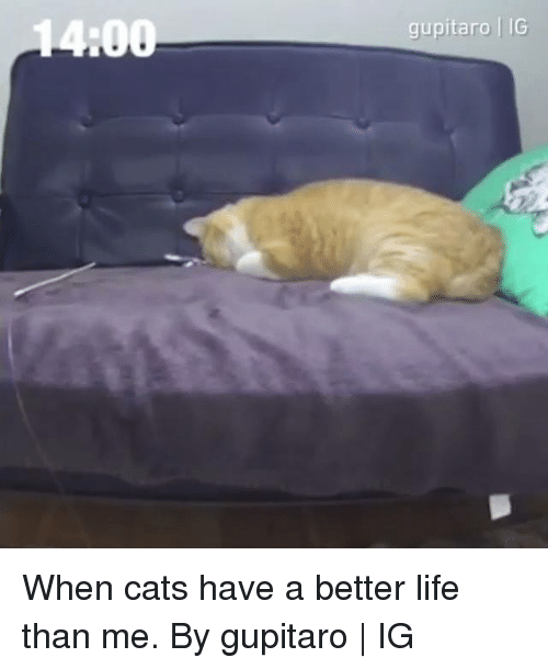 Cats, Dank, and Life: gupitaro IG When cats have a better life than me.  By gupitaro   IG