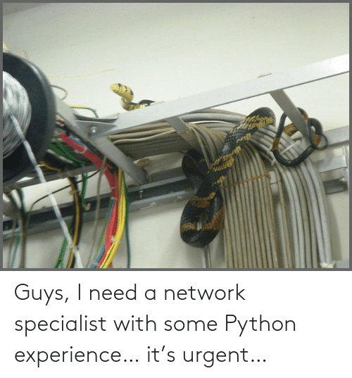 guys: Guys, I need a network specialist with some Python experience… it's urgent…