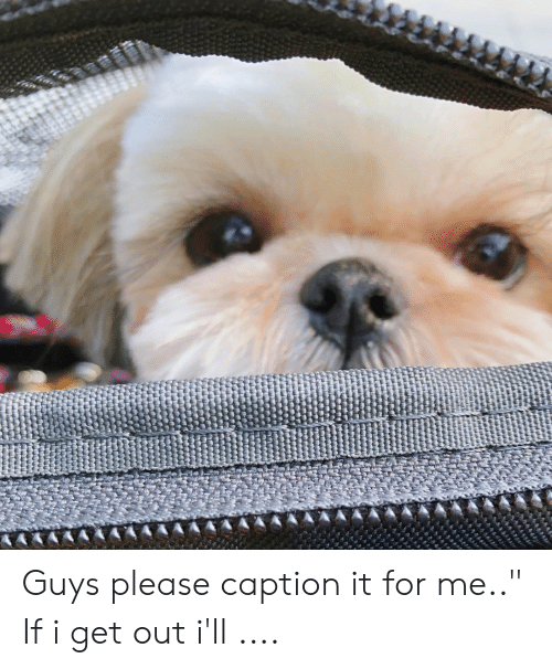 """For, Caption, and Get: Guys please caption it for me.."""" If i get out i'll ...."""