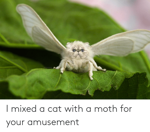 a cat: GYYPORAMA I mixed a cat with a moth for your amusement