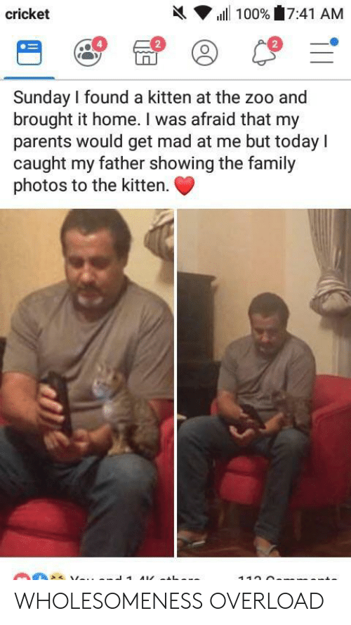 Caught My: h( ▼ ill 100%'17:41 AM  cricket  2  2  Sunday I found a kitten at the zoo and  brought it home. I was afraid that my  parents would get mad at me but today I  caught my father showing the family  photos to the kitten. WHOLESOMENESS OVERLOAD