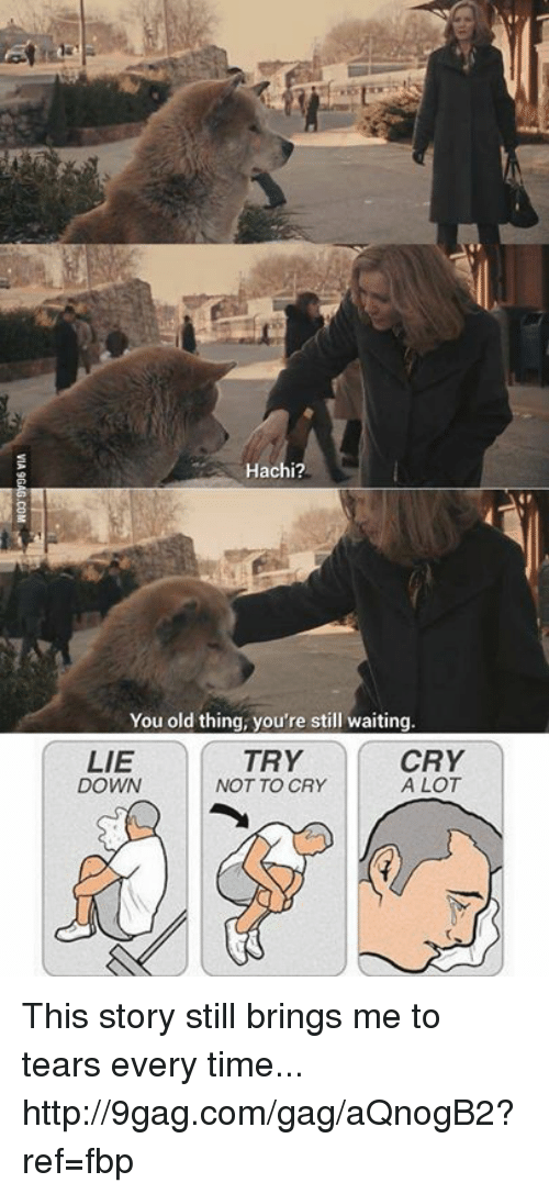 hachi: Hachi?  You old thing, you're still waiting.  CRY  LIE  TRY  A LOT  NOT TO CRY  DOWN This story still brings me to tears every time... http://9gag.com/gag/aQnogB2?ref=fbp