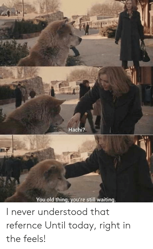 hachi: Hachi?  You old thing, you're still waiting I never understood that refernce Until today, right in the feels!