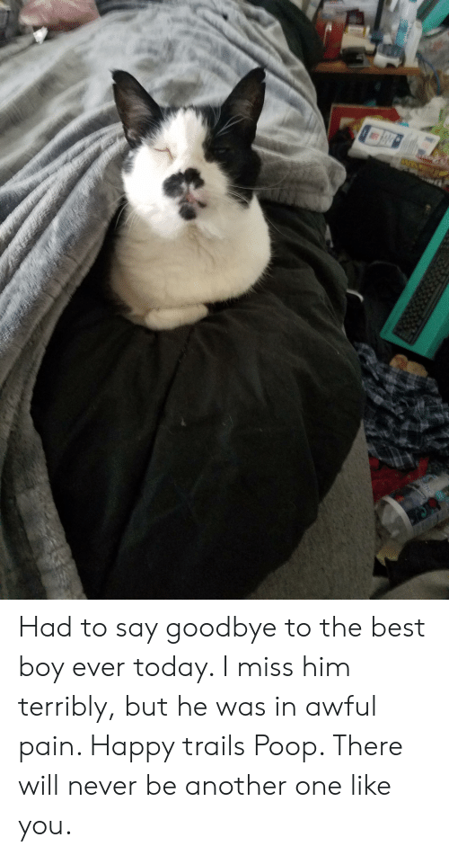 Another One, Poop, and Best: Had to say goodbye to the best boy ever today. I miss him terribly, but he was in awful pain. Happy trails Poop. There will never be another one like you.