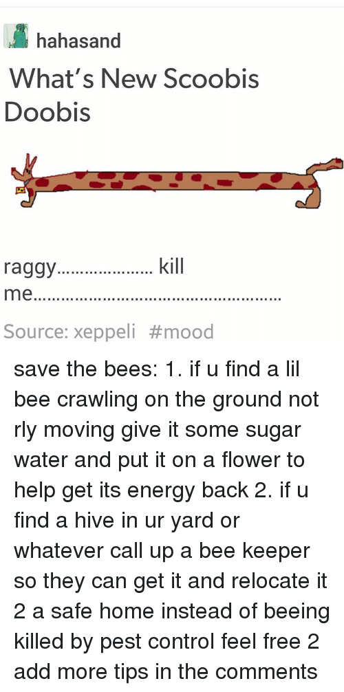 Black Twitter, Add, and Hive: hahasand  What's New Scoobis  Doobis  kill  raggy...............  me  Source: xeppeli save the bees: 1. if u find a lil bee crawling on the ground not rly moving give it some sugar water and put it on a flower to help get its energy back 2. if u find a hive in ur yard or whatever call up a bee keeper so they can get it and relocate it 2 a safe home instead of beeing killed by pest control feel free 2 add more tips in the comments