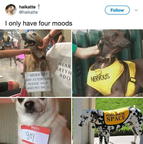 Give Me Space: haikatte  Follow  @haikatte  I only have four moods  HEAR  GREY H  ADO  NERVOUS  NEVER GET  NEVER GET A  ANY ATTENTIO  PLEASE HELP  AND PET ME !!!  PLEASE GIVE ME  SPACE/  Hello  gay