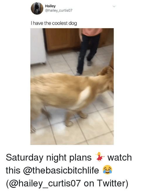 Memes, Twitter, and Watch: Hailey  @hailey_curtis07  I have the coolest dog Saturday night plans 💃 watch this @thebasicbitchlife 😂 (@hailey_curtis07 on Twitter)