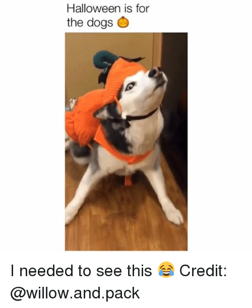 Dogs, Halloween, and Memes: Halloween is for  the dogs I needed to see this 😂 Credit: @willow.and.pack