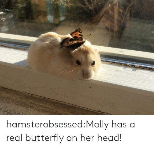 Butterfly: hamsterobsessed:Molly has a real butterfly on her head!