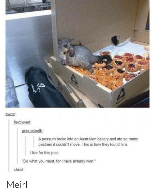 "Ate: HAOLIAY  SWOZ:  flextrovert  gnometeeth  A possum broke into an Australian bakery and ate so many  pastries it couldn't move. This is how they found him.  I live for this post  ""Do what you must, for I have already won.""  christ Meirl"