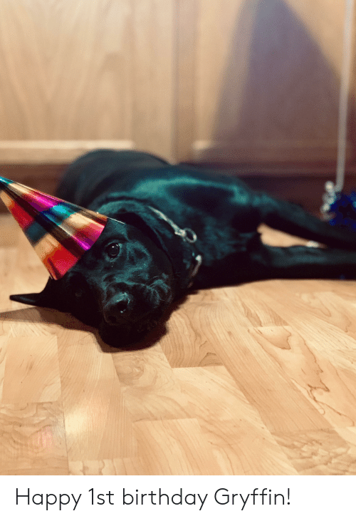 Happy 1st Birthday Gryffin! | Birthday Meme on awwmemes com
