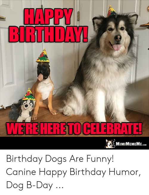 Birthday Dogs And Funny HAPPY BIRTHDAY WEREHERETOCELEBRATE Are Canine