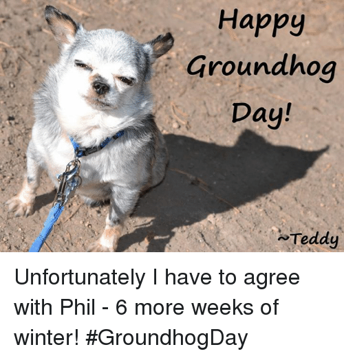 groundhog: Happy  Groundhog  Day!  Teddy Unfortunately I have to agree with Phil - 6 more weeks of winter!    #GroundhogDay
