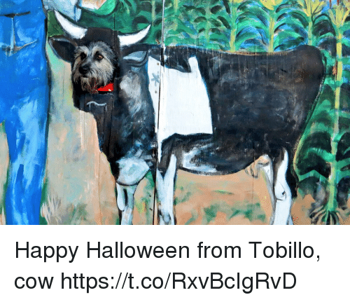Halloween, Memes, and Happy: Happy Halloween from Tobillo, cow https://t.co/RxvBcIgRvD