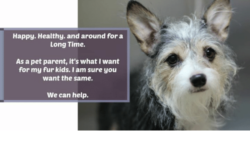 Memes, Happy, and Help: Happy. Healthy. and around for a  Long Time.  As a pet parent, it's what I want  for my fur kids. I am sure you  want the same.  We can help.