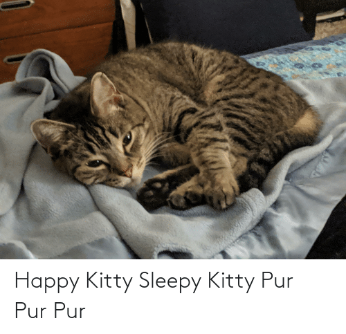 Aww Memes: Happy Kitty Sleepy Kitty Pur Pur Pur